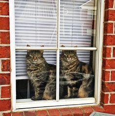 animais gêmeos: gatos