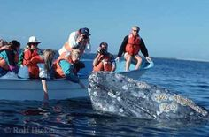 go whale watching and maybe even pet one!