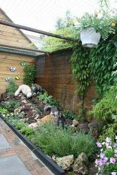 Wens voor in mijn tuin voor de katten