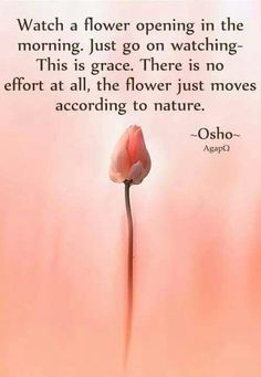 Thank you, Osho! Lots of love... Blog | wisdomintheirteachings