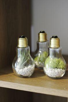 DIY Lightbulb Terrariums   cladandcloth.com 4