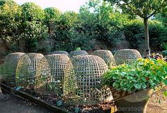 Hatfield House potager showing raised beds with wicker basket cloches, nasturtiums, and espaliered fruit trees.
