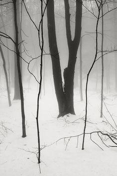 | A N O M A L I E N | — Fog Snow Woods by frntprchprss on Flickr.
