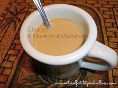 Chaga: A Medicinal Mushroom
