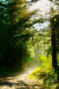 Beloved Forest