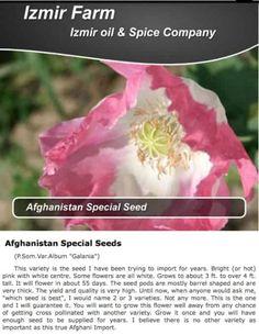 IzmirPoppy.com has a NEW Website: http://IzmirPoppy.us for BUYING ALL 'Izmir Oil and Spice - Izmir Farms' Somniferum Opium Poppy Seeds PRODUCTS via @jdubtbird