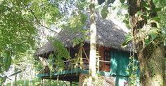 Monkey Tree, Bocos del Toro