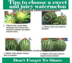 How to choose a sweet and juicy watermelon.  https://www.facebook.com/lightstays/photos/a.183395278392659.47481.125893754142812/679148285484020/?type=1
