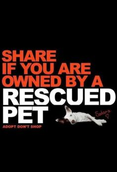 Share if you are owned by a rescued pet!  Don't Shop - Adopt!