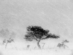 Palkitut | Vuoden Luontokuva