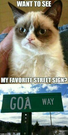 Grumpy Cat Quotes, Funny Grumpy Cat Memes, Cat Jokes, Crazy Funny Memes, Really Funny Memes, Funny Cats, Funniest Memes, Funny Cat Quotes, Seriously Funny