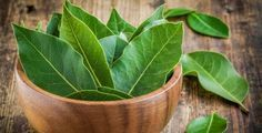 Amazing bay leaf benefits abound in healing oils and teas. Bay is a 'salt buster' herb. Add bay for flavoring, use less salt. Growing Herbs At Home, Best Herbs To Grow, Bay Leaf Benefits, Wasp Repellent, Fresh Bay Leaves, Sage Plant, Types Of Herbs, Herbs Indoors, Insomnia