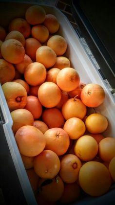 Home grown grapefruit harvest