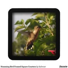 Humming Bird Framed