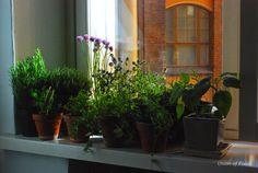 Herb Garden for the Kitchen