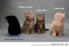 Heavy metal cat…