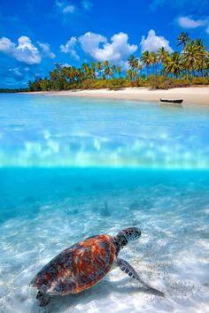 photo sous la surface de l'eau, photo aquatique incroyables