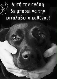 Kindness To Animals, Greek Words, Greek Quotes, Forever Love, Dog Quotes, Animal Kingdom, Peace And Love, Animals And Pets, Minions