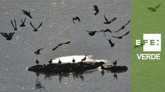 - El azud de Badajoz ha generado un ecosistema único en Red Natura 2000 ...