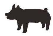Livestock Show Pig Clip Art