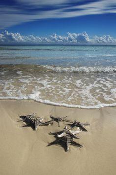 """""""Tangalooma Starfish"""" on Moreton Island"""