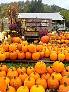 OCTOBER...go on an outing to a pumpkin patch or a farmers' market and pick out the perfect pumpkin for a Jack-o-Lantern, Indian corn, bittersweet and gourds for decorating.