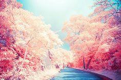 pretty pink tree path
