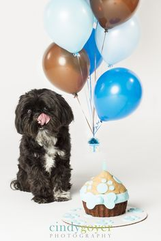 Remember the balloons - Dog Birthday Cake Smashes to Make You Smile - Photos Puppy Birthday, Animal Birthday, Birthday Cake, Dog Photos, Dog Pictures, Family Pictures, Animal Photography, Photography Kids, Photography Business