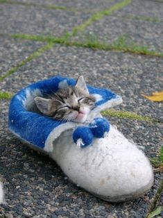 kitten in a slipper... I just... I can't...