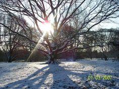 snowy winter on Hampstead Heath in London