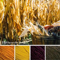 'Indian Corn' color palette features SHETLAND yarn in Gold, Marigold, Blackberry and Walnut.  #fall #thanksgiving