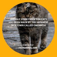 Google-street-view-cats