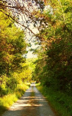 The Beautiful Isolation Of A Tennessee Country Road! Photo by Robin Shake
