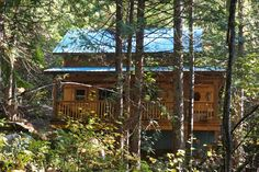 Cottonwood in the Fall Cottages, Cabin, House Styles, Fall, Nature, Beautiful, Design, Home Decor, Autumn
