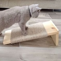From DIY dog beds to DIY cat toys, there are plenty of DIY pet ideas and projects to choose from that are budget friendly. Diy Pet, Diy Dog Bed, Dog Beds, Diy Cat Tree, Cat Towers, Cat Scratcher, Cat Room, Pet Furniture, Animal Projects