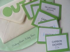 Botany: Photosynthesis game and lapbook