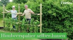 Himbeerspalier bauen The Effective Pictures We Offer You About Garden Types backyards A quality pict