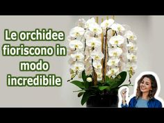 Your Orchid Will Bloom all Year Round. 7 Growing Orchids Tips You Should Know - - Your Orchid Will Bloom all Year Round. 7 Growing Orchids Tips You Should Know. Orchid Pot, Orchid Plants, Orchids Garden, Garden Plants, Orchid Fertilizer, Orchid Leaves, Types Of Orchids, Hydroponic Plants, Growing Orchids
