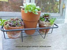 Terra Cotta Clay Pots in a rustic basket