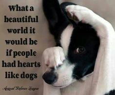 anim, heart, dogs, pet, true, puppi, people, quot, friend