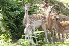 Passeio Verde: Vida selvagem no Parque Biológico da Serra da Lousã