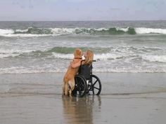 No words needed.....love is...