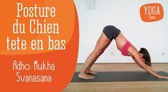 Vidéos - les postures de yoga pas à pas