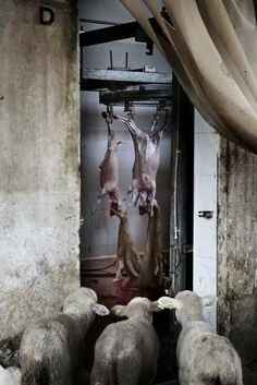 Tommaso Ausili, The Hidden Death - Sony World Photo award winning series of images taken from inside an abattoir.