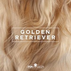 #Dog-Inspired #Design: We think the best, most #beautiful #coats belong to our four-legged family members. #GoldenRetriever
