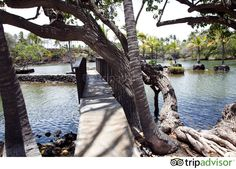 Mauna Lani Bay Hotel & Bungalows (Puako, HI) - Resort Reviews - TripAdvisor