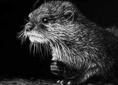 Otter | 5x7 scratchboard | Melissa Helene Fine ARts + Photography  www.melissahelene.com #wildlife #otter #scratchboard #animalart #blackandwhite #melissahelenefinearts
