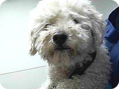 15-06231's Story... 15-06231 Poodle Mix White w/ Tan Spots Impounded on 09/10/2014 from South Gate Available for adoption holds on 09/10/2014. Adoption availability Date 09/20/2014. Adoption holds must be placed in person. Please visit SEAACA to see me.