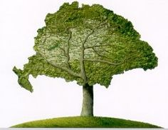 Különösen szép fa...