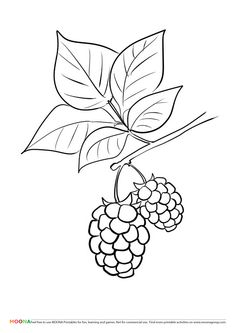 Free Printable Coloring Pages For Toddlers And Preschoolers Blackberry Click Through